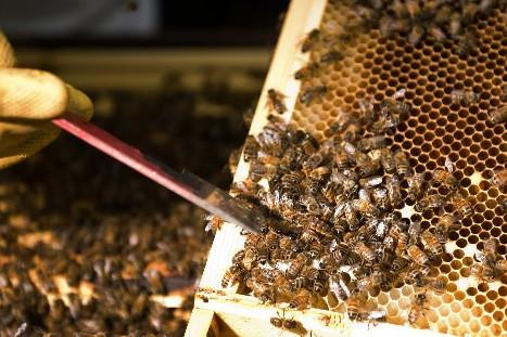 Dans la ruche, tout est bon pour la... (Photo: AFP)