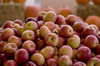 La saison de l'autocueillette des pommes bat... (Photo: David Boily, La Presse)