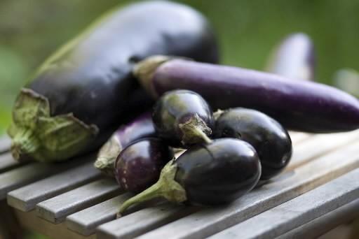 Plusieurs variétés d'aubergines... (Photo: François Roy, La Presse)