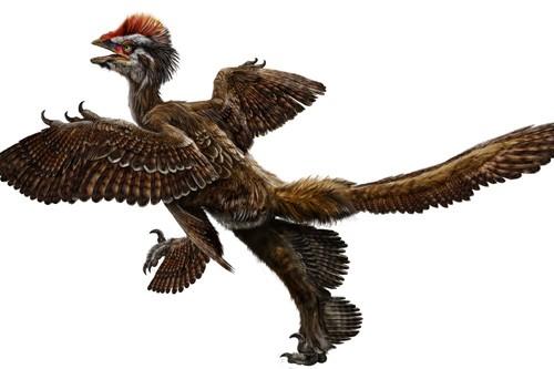 Une reconstitution du dinosaure Archaeopteryx.... (Photo: AP)