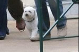Sumo, le chien du couple Chirac.... (Photo: AFP)