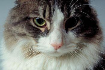 Un vétérinaire estime qu'un chat a évité de... (Photo: Phtothèque La Presse)