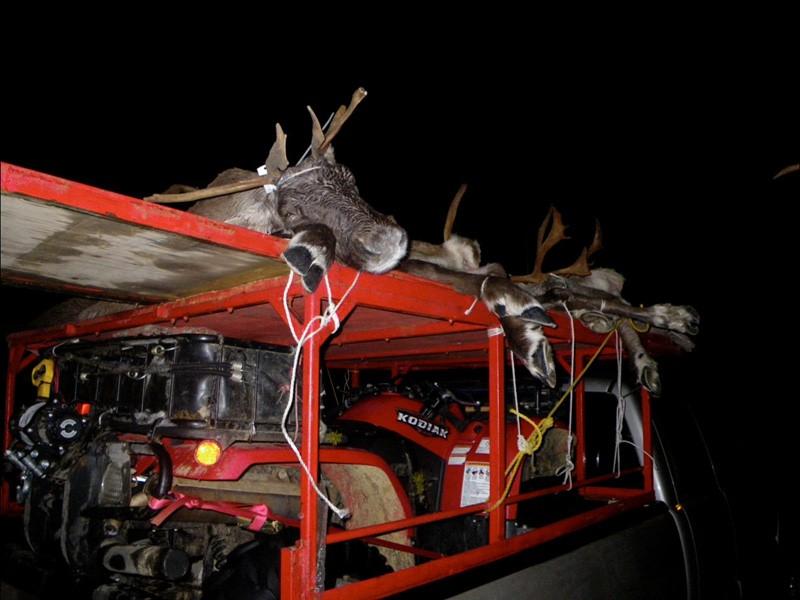 La chasse aux caribous en pleine face... (Photo: Yann Perreau)