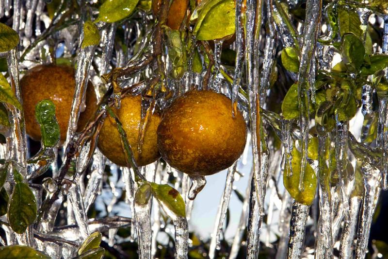 La livre de jus d'orange congelé pour livraison... (Reuters)