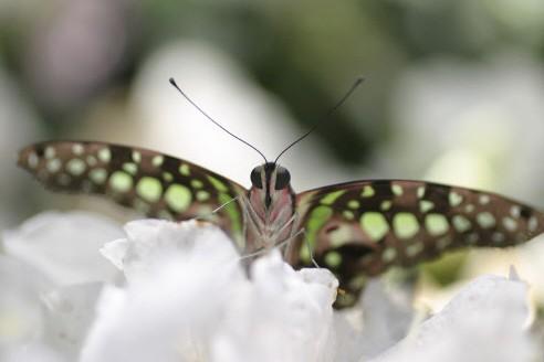 De tous les animaux identifiés sur Terre, un... (Photo: fournie par l'insectarium)