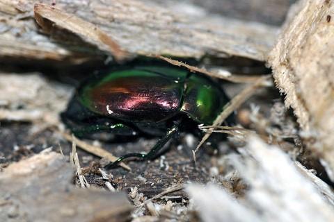 On pourra bientôt commander une brochette de larves... (Photo: AFP)