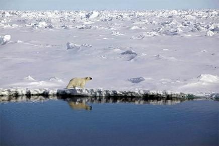 Un ours polaire marche le long du passage... (Photo: Reuters)
