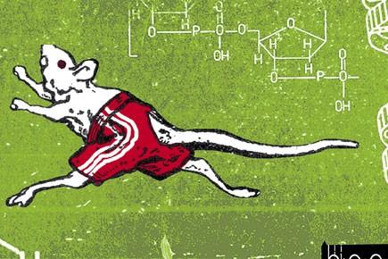 Le jour où l'on créera des super-athlètes grâce... (Illustration David Lambert)
