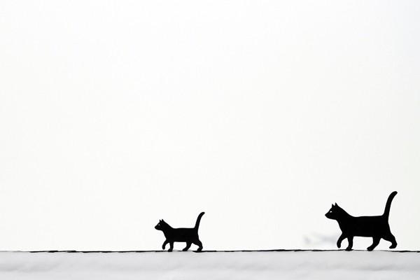 Des chats sur le toit d'une maison enneigée,... (Photo AFP)