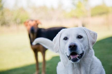 On connaissait les aptitudes du chien à pouvoir... (Photothèque: La Presse)