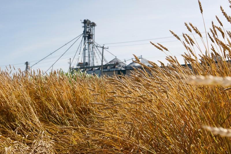 Dans un proche avenir, le maïs et le... (Photo Martin Chamberland, Archives La Presse)