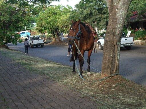 On peut se promener à cheval dans les rues du Hanga Roa. | 1 mars 2011