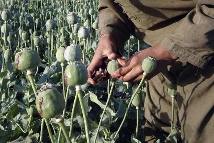 Les problèmes liés à la production de drogues,... (Photo: Abdul Khaleq, ARchives AP)