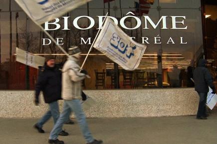 Le Biodôme et l'Insectarium restent fermés à cause... (Photo: David Boily, La Presse)