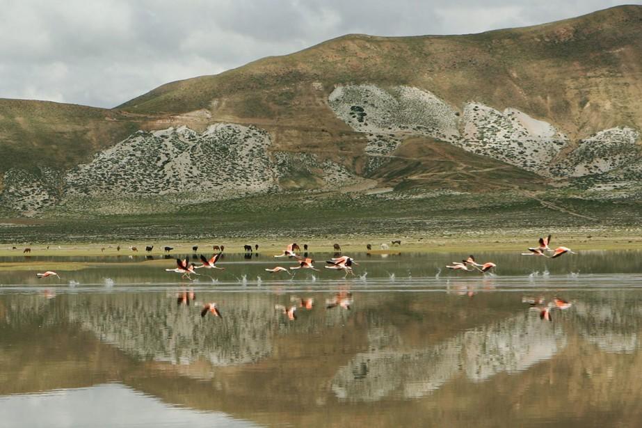 Région désertique de la Bolivie, près d'Uyuni. Le... (Photo: archives AFP)
