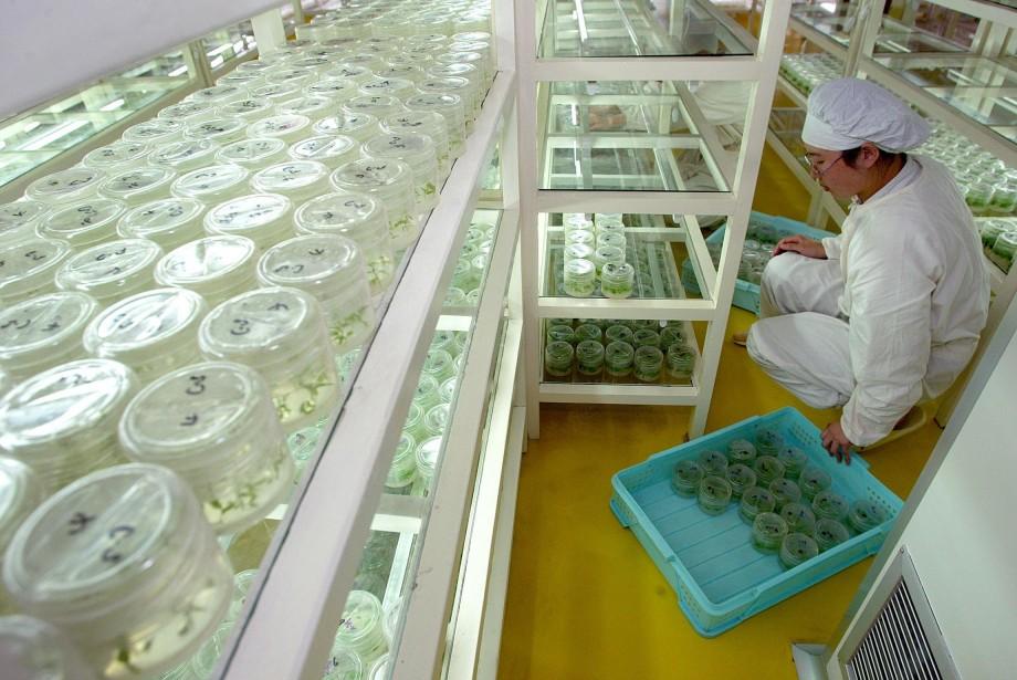 Un chercheur de Shangai se consacre à l'étude... (PHOTO: LIU JIN, ARCHIVES AFP)