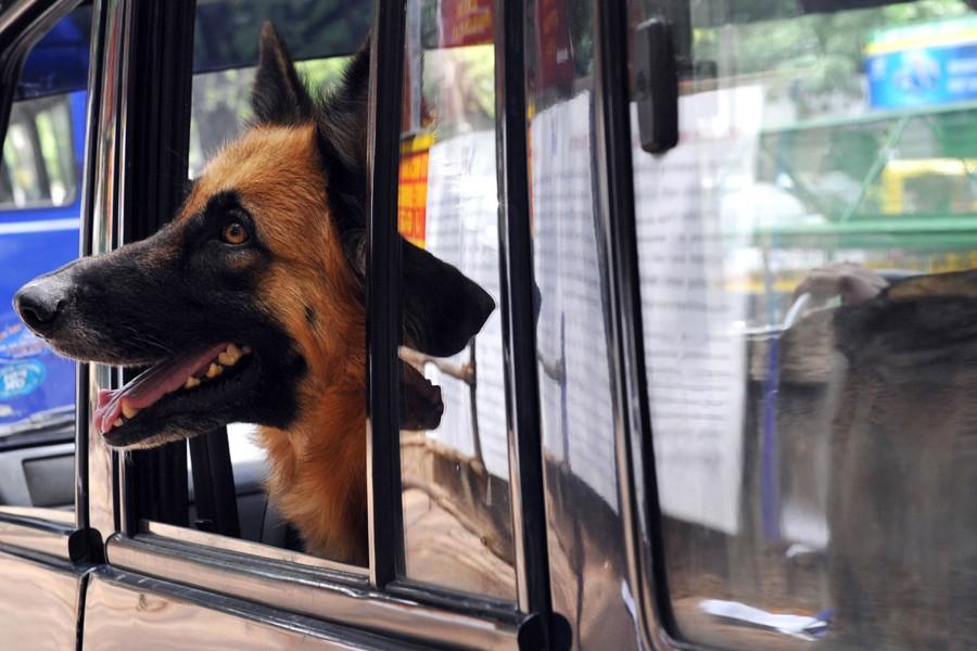Un chien policier indien.... (Photo: Archives AFP)