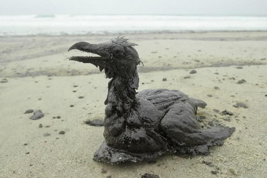 Un oiseau englué dans le pétrole déversé au... (Photo: archives AP)