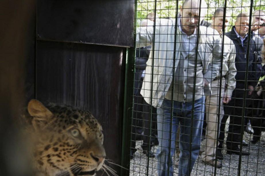 Vladimir Poutine a ouvert la cage du lépoard... (Photo: Reuters)