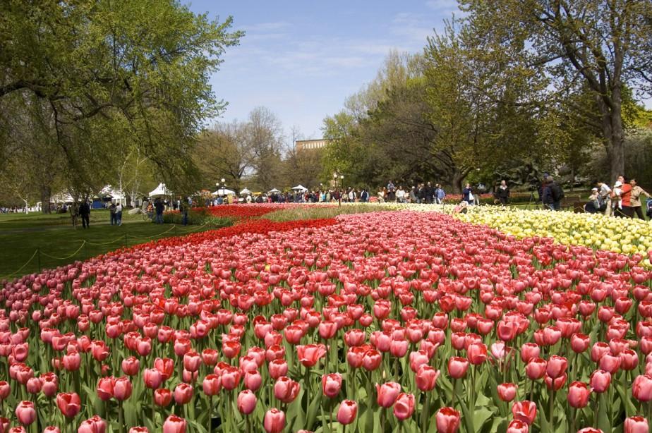 Plus d'un million de bulbes ont fleuri dans... (Photo: fournie par tourisme Ottawa)