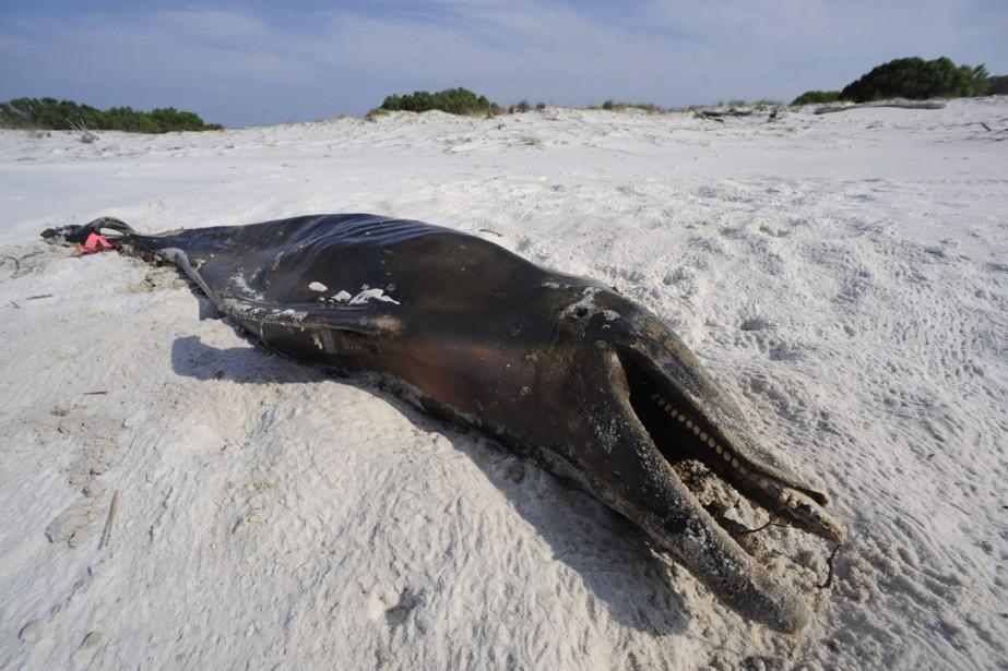 Le cadavre d'un dauphin repose sur une berge... (Photo: AP)