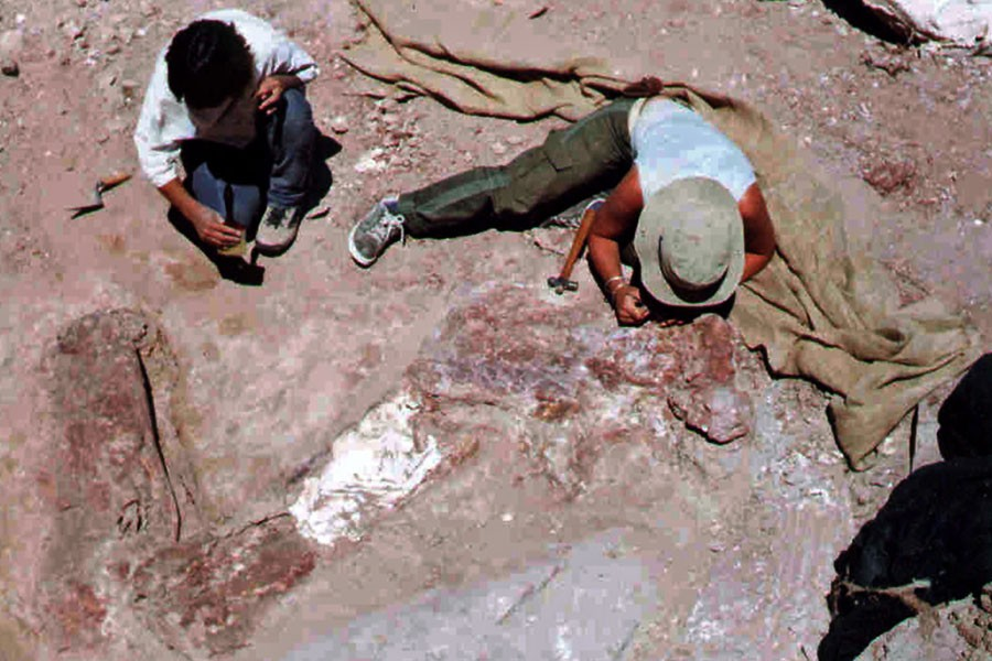 En 2006, le fossile d'un Cathersaura, un dinosaure... (Photo: Archives AFP)