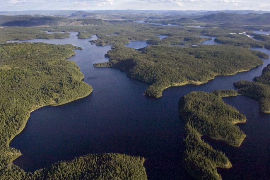 Sur la photo, la forêt boréale canadienne.... (Photothèque La Presse)