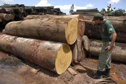 Un officier des forces nationales inspecte des arbres... (Photo Reuters)