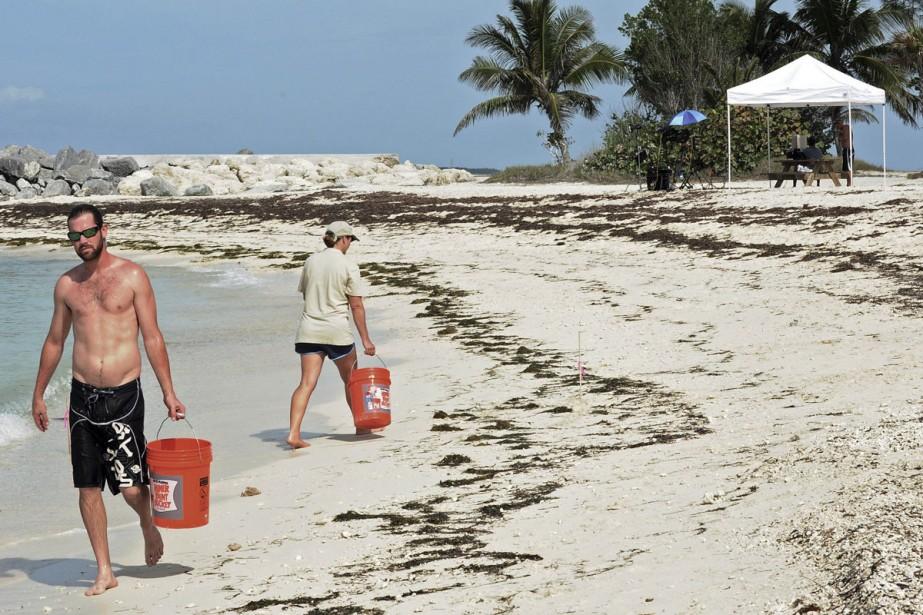 Des équipes d'écologistes collectent des échantillons de sable... (Photo: archives AP)