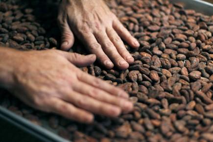 Inspection de fêves de cacao.... (Photo Reuters)