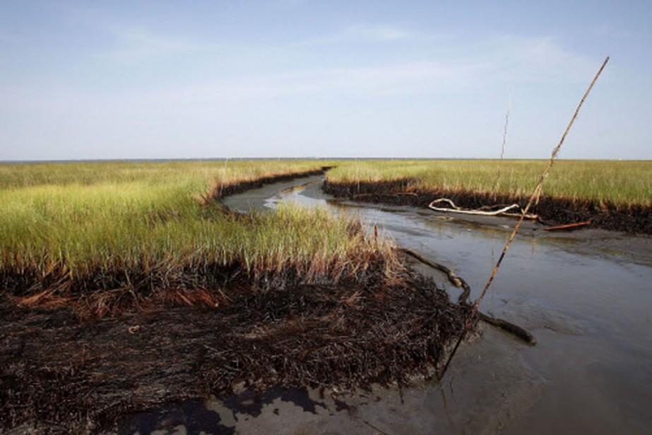 Les conséquences écologiques de la marée noire pourraient... (Photo: AP)