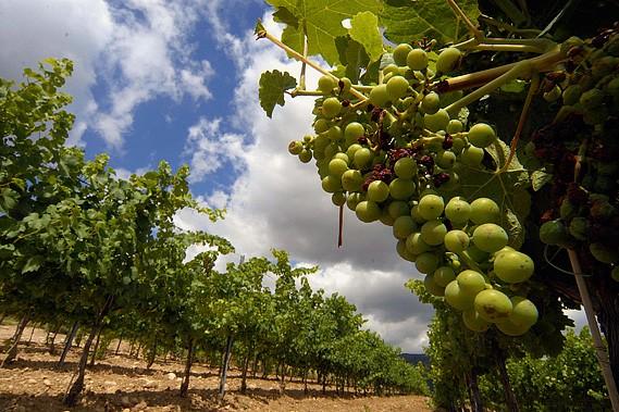 Un vignoble à Tremp, en Espagne.... (Photo: Bloomberg)