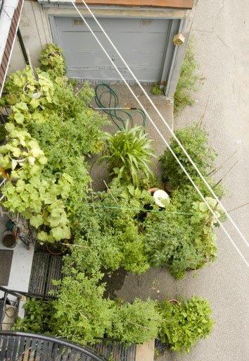 Une vue à vol d'oiseau du jardin « balcon et bitume » de Lorraine. À noter que les voisins la laissent déborder sur leur escalier (bas de la photo) et dans l'entrée de garage (haut de la photo). Oublions la corde à linge (double diagonale blanche) mais remarquons les cordelettes qui arriment les tuteurs de tomates à la maison, en cas de grand vent.   30 mars 2011