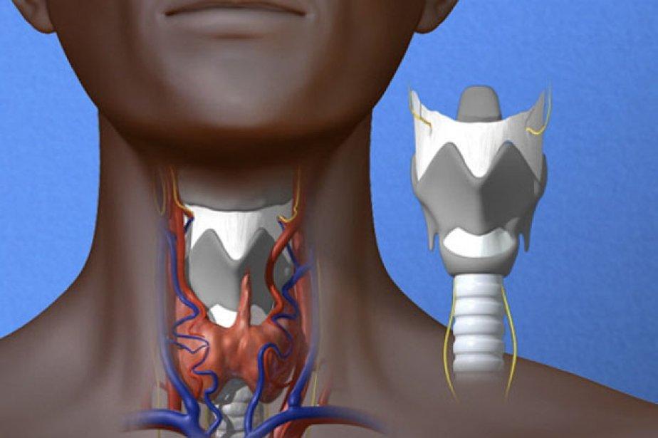 «Le larynx est un organe incroyablement complexe, avec... (Illustration Reuters/UC Davis Medical Center)