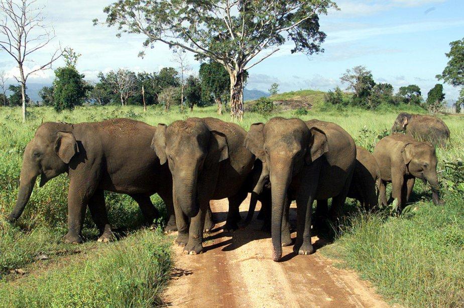 Un troupeau d'éléphants dans un parc national au... (Photo: archives Reuters)