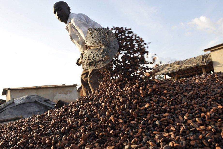 Un fermier à l'oeuvre dans une plantation de... (Photo: archives AFP)