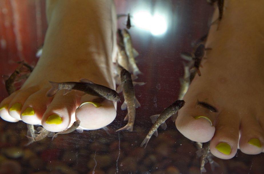 Une séance de «fish pedicure» consiste à plonger... (Photo: Alain Roberge, archives La Presse)