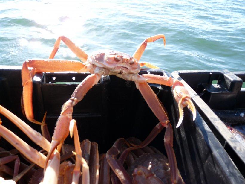 Crabe ewe - Page 15 326283-vigoureux-crabe-neiges-tente-sauter