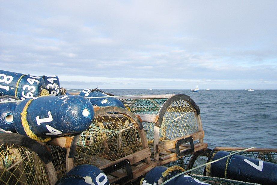 Les cages aux homards aux Îles-de-la-Madeleine ont été... (Photothèque Le Soleil)