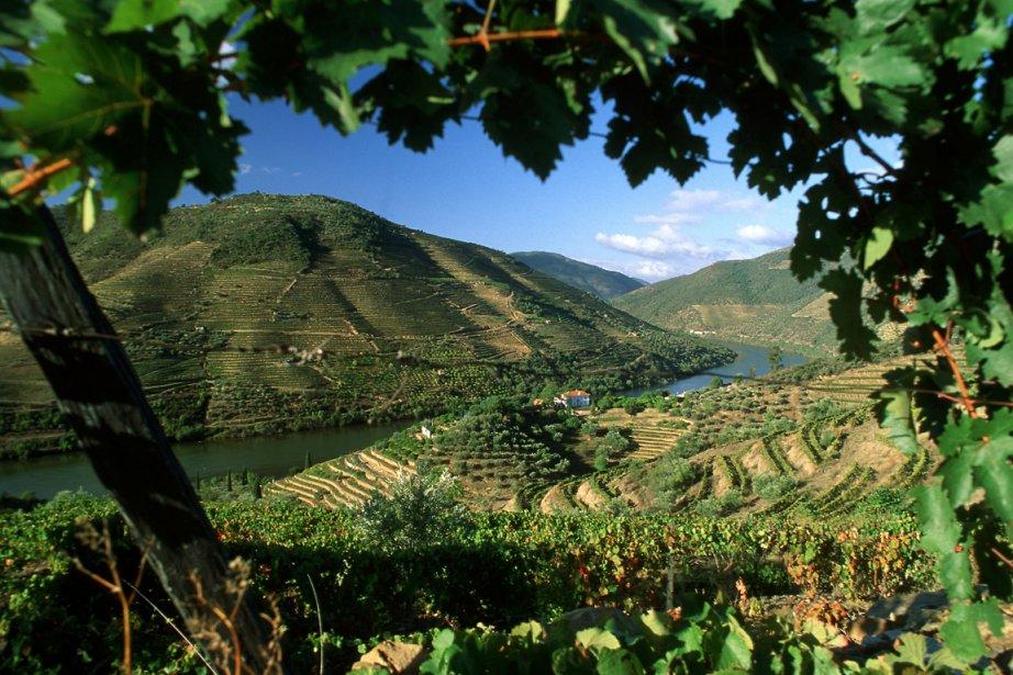 Un vignoble au Portugal... (Photo: AFP)