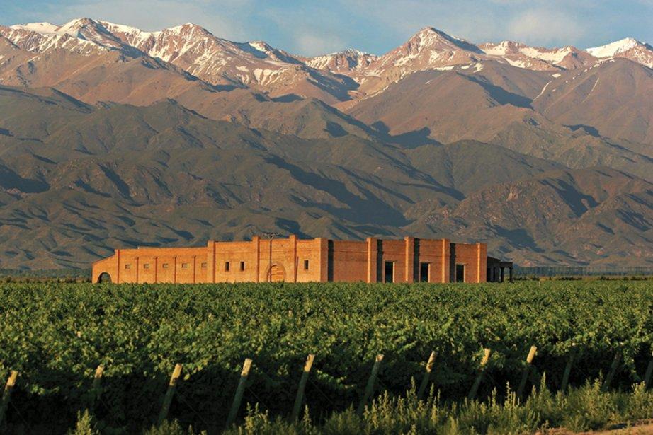 Des vignes à Mendoza, en Argentine...