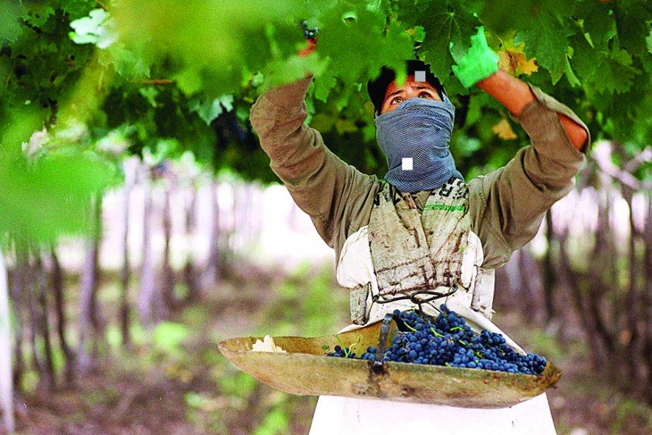 «Le vin Fuzion... vous connaissez?» Paolo Sacerdotte,... (Photo: archives AP)