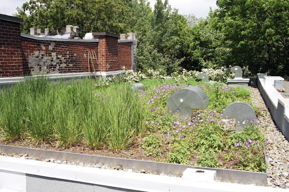 Un toit vert... (Photo fournie par le Centre d'écologie urbaine)