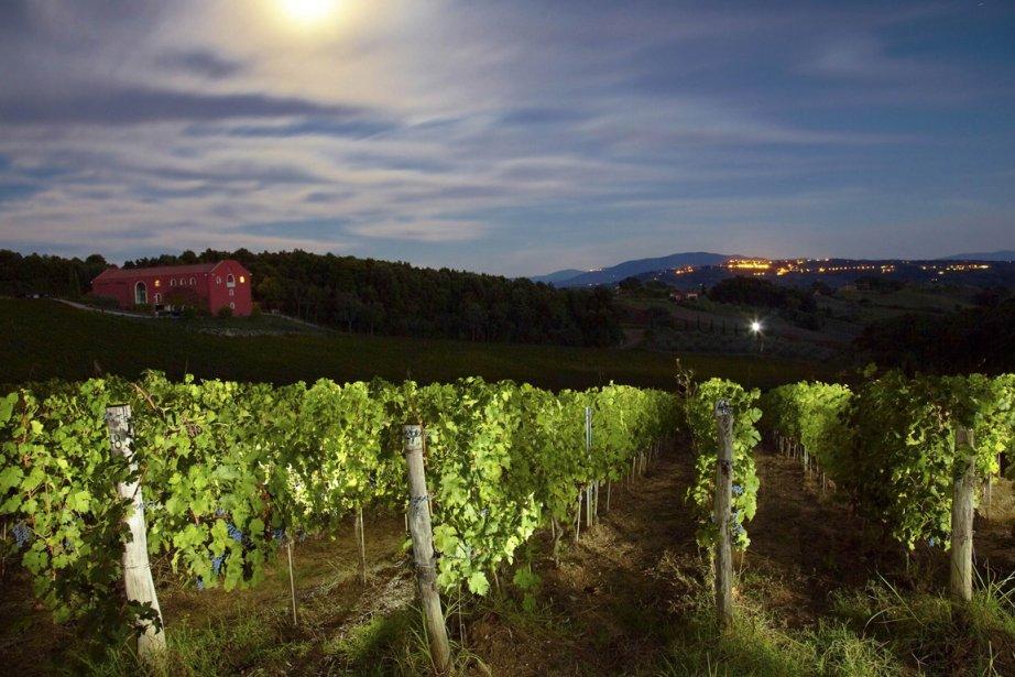 Un vignoble en Toscane... (Photo: archives AFP)