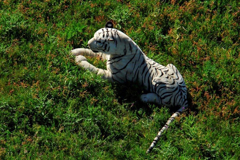 Le fameux tigre en peluche qui a alerté... (Photo: AP)
