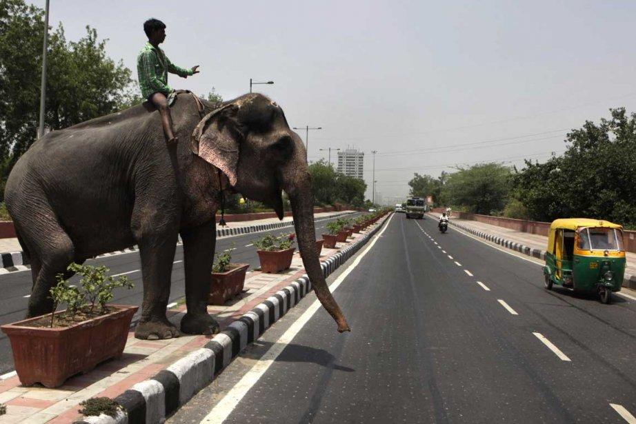 L'Inde compte quelque 25 000 éléphants sauvages mais... (Photo Associated Press)