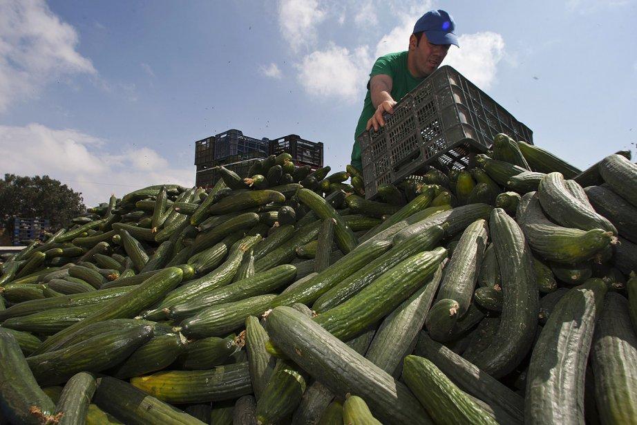 Un agriculteur espagnol jette des concombres qu'il n'a... (Photo: Reuters)