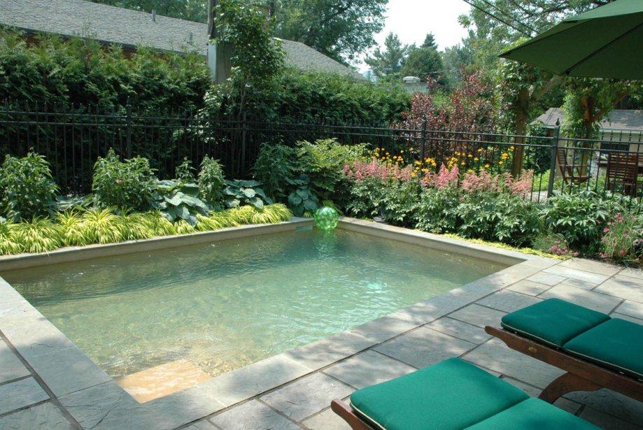 Les piscines en b ton n cessitent elles moins d 39 entretien for Algues brunes piscine