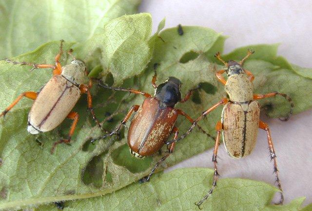 Le scarab e du d sespoir pierre gingras jardiner - Comment se tuer efficacement ...