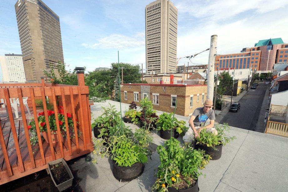 l 39 agriculture en ville en pleine croissance claudette samson agro alimentaire. Black Bedroom Furniture Sets. Home Design Ideas